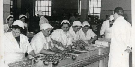Ribja predelovalna industrija v Izoli, 4. del (obdobje po drugi svetovni vojni)
