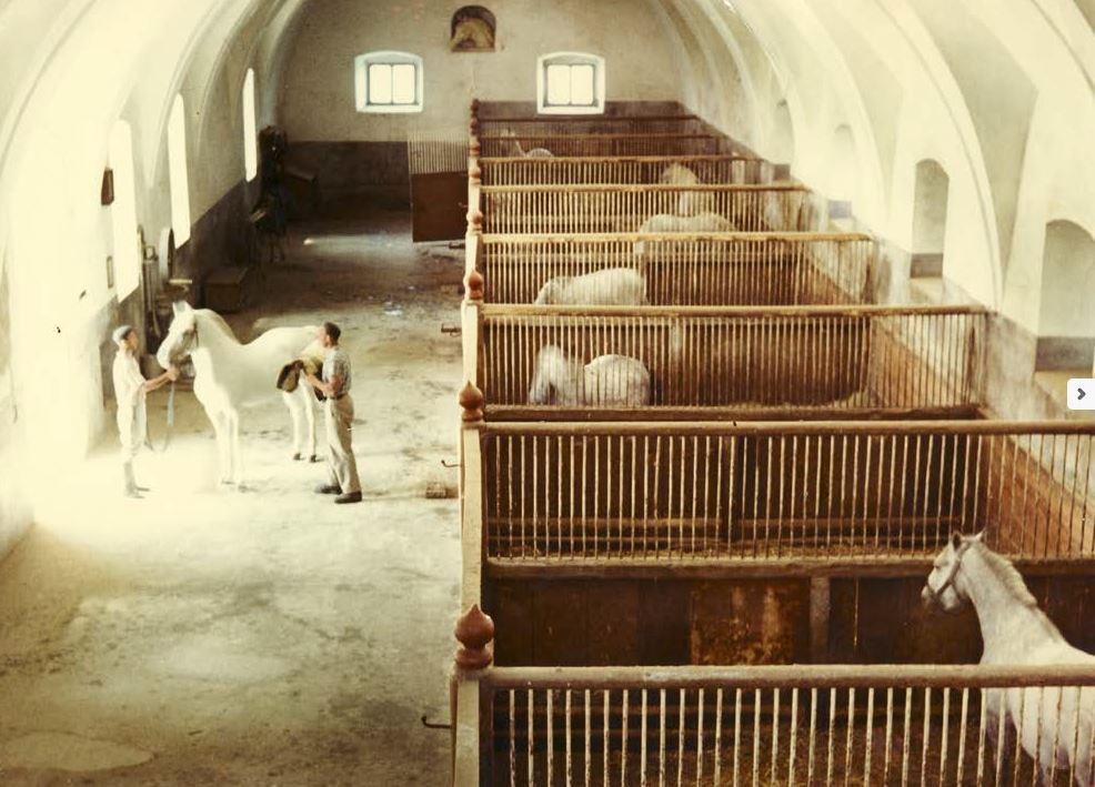Notranjost kobilarne Lipica. Foto: lipica.org